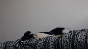 Calle benyttede sig af muligheden for at sove i sin egen seng.